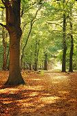 Atmospheric autumn scene in forest, De Bilt
