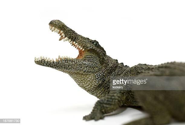 Attaque crocodile isolé sur blanc