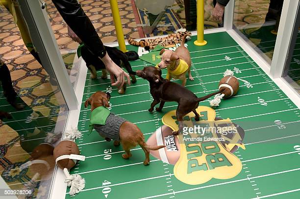 "Attendees cuddle with puppies from a local rescue Paw Works who are on hand to promote Animal Planet's ""Puppy Bowl XII' during the Discovery..."