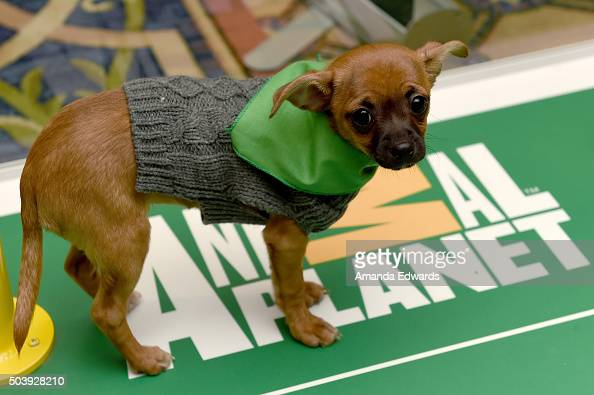 """Attendees cuddle with puppies from a local rescue Paw Works who are on hand to promote Animal Planet's """"Puppy Bowl XII' during the Discovery..."""