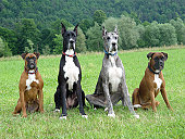Four dogs waiting for their owner. See my other dog pics ...
