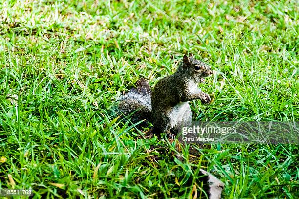 Attentive Squirrel Holding a Nut