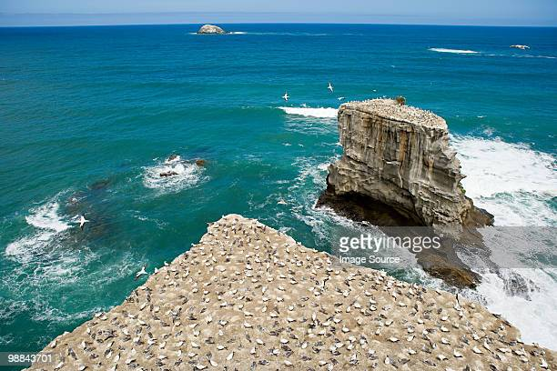 Auckland, aerial view of gannet rocks on Muriwai Beach