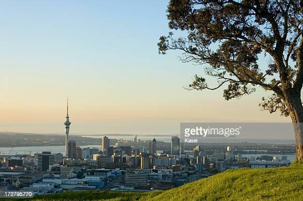 Auckland CBD und Baum