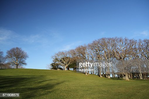 Auckland Domain in Winter : Stock Photo