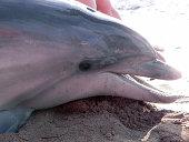 Ein gestrandeter Delfin am Schwarzen Meer