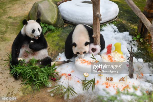 LUMPUR Aug 23 2017 Giant pandas Liang Liang and Nuan Nuan eat during a birthday celebration at the National Zoo in Kuala Lumpur Malaysia on Aug 23...