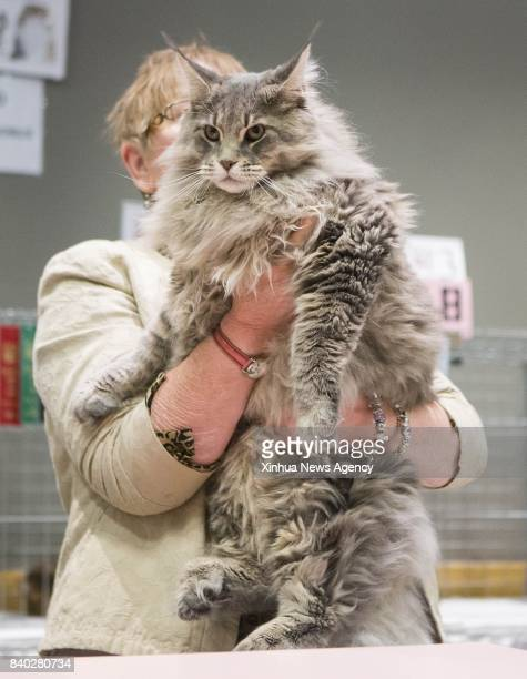 A member of the judging committee checks a pet cat during a cat competition at Canadian National Exhibition in Toronto Canada Aug 27 2017 More than...