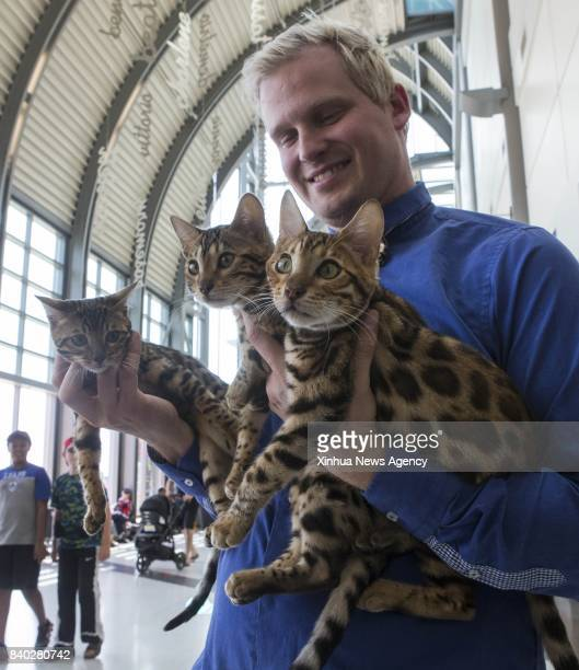 A member of the judging committee shows three pet cats during a cat competition at Canadian National Exhibition in Toronto Canada Aug 27 2017 More...