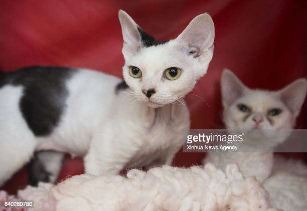 Two pet cats are seen during a cat competition at Canadian National Exhibition in Toronto Canada Aug 27 2017 More than 125 cats from Canada...