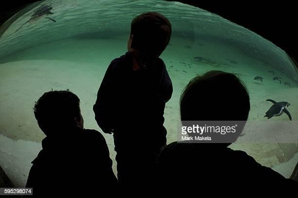 Aug 29 2011 London England UK A trio of boys gaze into the penguin exhibit at the London Zoo