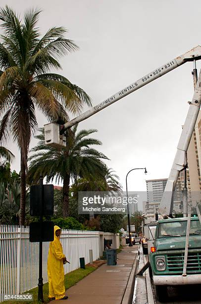 August 25 2012 Coconuts Being Removed From Trees For Protection Of Strong Winds As Florida Prepares For Hurricane Isaac