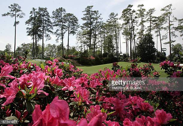 The azalea's are in full bloom on the tenth hole during first practice round 03 April 2006 at the Augusta National Golf Club the site of the Masters...