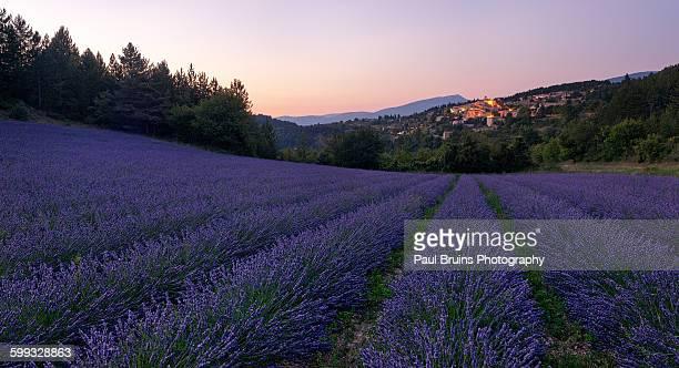 Aurel Lavender Dusk