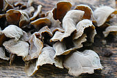 Auricularia auricula judae, known as the Jew's ear, wood ear, jelly ear on the hive, edible mushroom, macro photography, nature