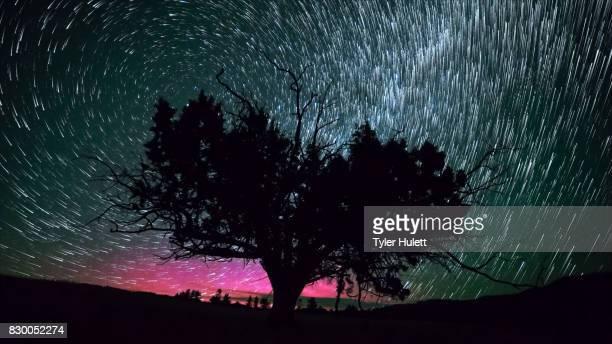 Aurora and Western Juniper Night Sky Star Trails Over Oregon