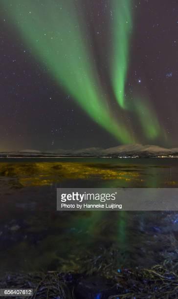 Aurora & Bioluminescent Organisms