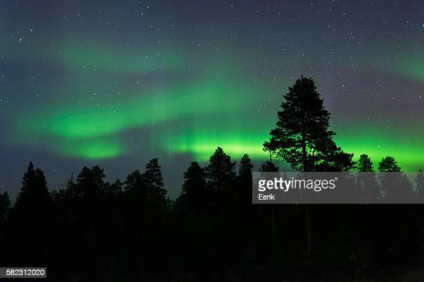 Aurora Borealis above boreal forest