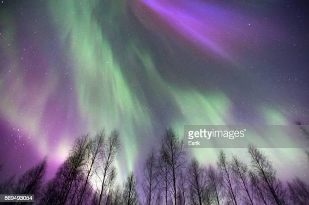 Aurora borealis above treetops