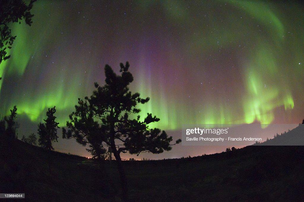 Aurora borealis and silhouette of small tree