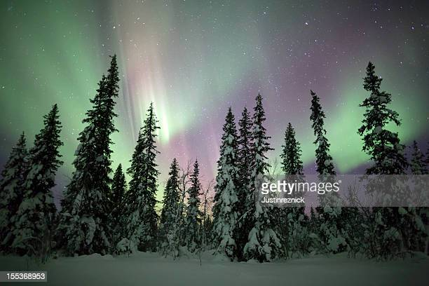 Aurora Borealis over Snow and Trees