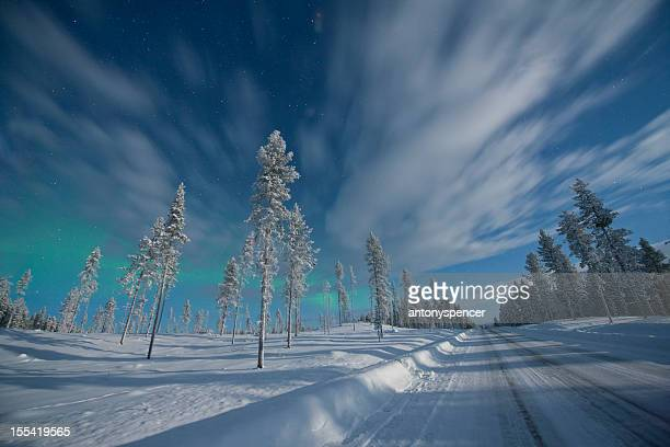 Aurora Borealis over snow covered pine trees