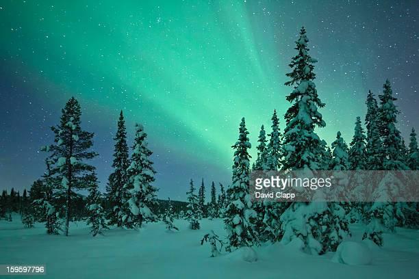 Aurora in a frozen forest in  Kiruna, Sweden