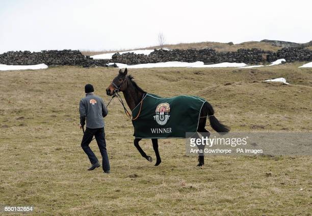 Auroras Encore and assistant trainer Ryan Clavin make their way across a field to their local pub the Dick Hudsons during the winners photocall at...