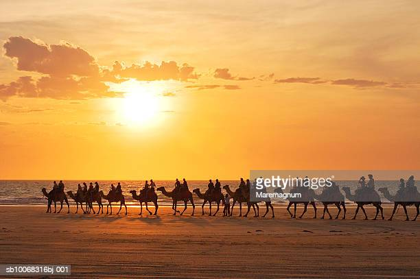 Australia, Broome, silhouette of people riding camels on beach at sunset