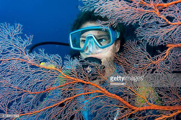 Australia, Great Barrier Reef, Diver behind sea fans
