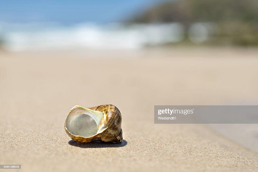Australia, New South Wales, Broken Bay, shell of a sea snail at the beach
