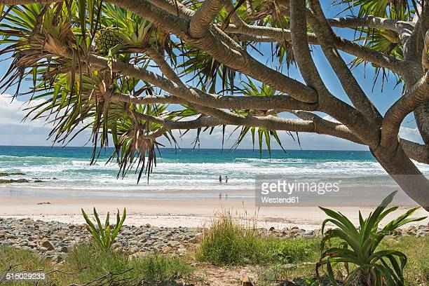 Australia, New South Wales, Byron Bay, Broken Head nature reserve, cabbage tree and view to the beach