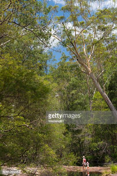 Australia, New South Wales, Mullumbimby, mother and child on the move in Nightcap National Park