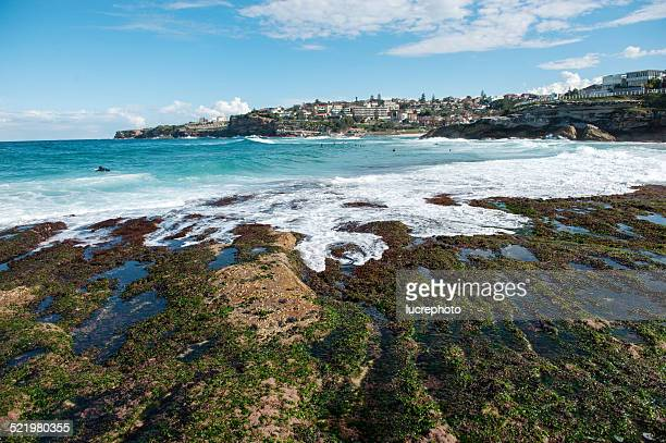 Australia, New South Wales, Sydney, Tamarama beach