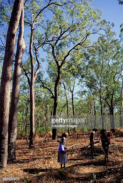 Australia Northern Territory Bathurt Island One Of Two Tiwi Aboriginal Islands Tiwi Possum Hunt