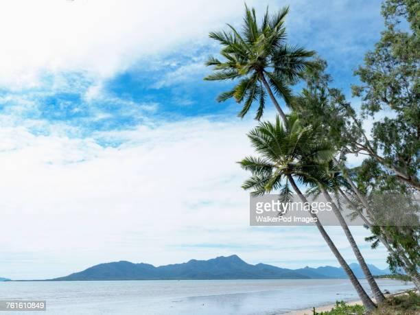 Australia, Queensland, Palm trees at beach