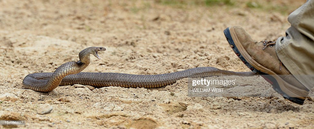 Deadly Snakes  Letter