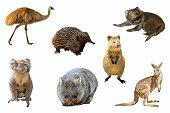 Collage of Australian animals, isolated on white background. The Emu, Echidna, Tasmanian Devil, Wombat, Kangaroo, Quokka and the Koala.