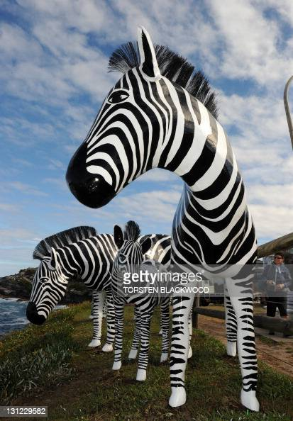 Australian artists Alan and Julie Aston's fibreglass zebras entitled 'Simply Black White' overlooks Bondi Beach during the launch of the 15th annual...