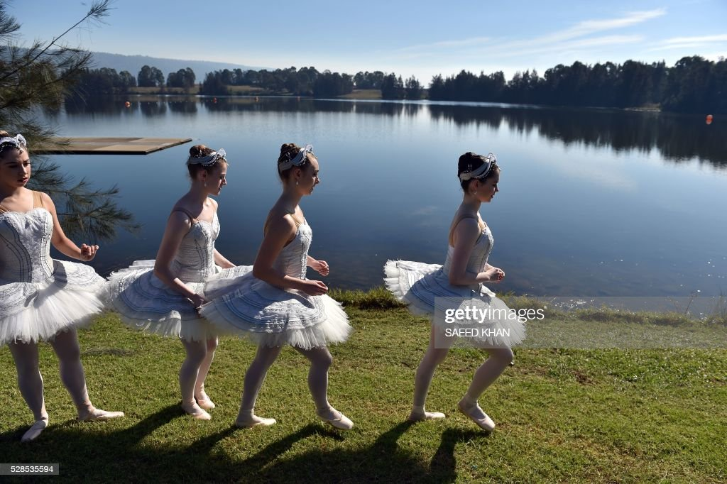 Australian Ballet dancers in white swan tutus arrive for a media call on a 20-metre barge in Penrith Lakes in western Sydney on May 6, 2016. / AFP / SAEED