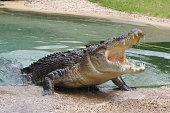 Australian Crocodile in Sydney, Australia