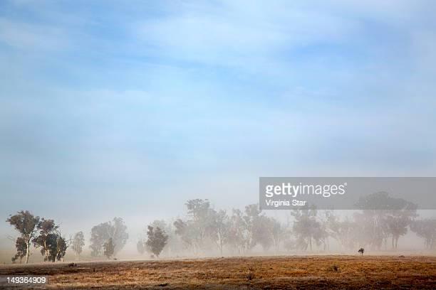 Australian native trees in fog
