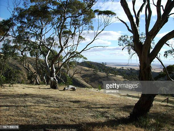 Australian Outback Scene of rolling hills and gumtrees