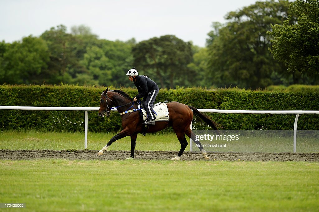 Australian trained Shamexpress works on the Side Hill gallop on June 13, 2013 in Newmarket, England.