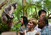 Australia's Foreign Minister Julie Bishop and her Singaporean counterpart K Shanmugam admire a koala after officiating the opening of a new exhibit...