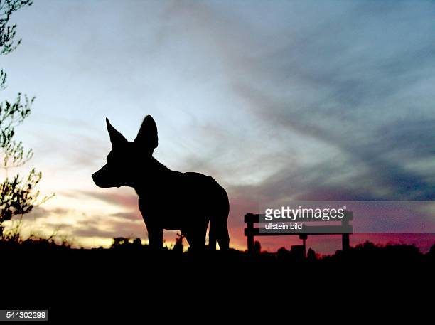 Australien UluruKata Tjuta National Park Silhouette eines Dingos bei Sonnenuntergang