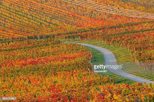 Austria, Burgenland, Oberpullendorf District, Blaufraenkischland, Neckenmarkt, vineyard and road in autumn