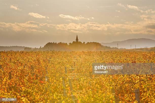 Austria, Burgenland, Oberpullendorf District, Lackendorf, vineyard and church in autumn