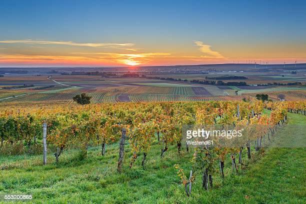 Austria, Burgenland, Oberpullendorf District, near Neckenmarkt, vineyards at sunrise in autumn, View over Deutschkreutz, Blaufraenkischland