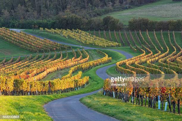 Austria, Burgenland, Oberpullendorf District, Neckenmarkt, road and vineyard in autumn